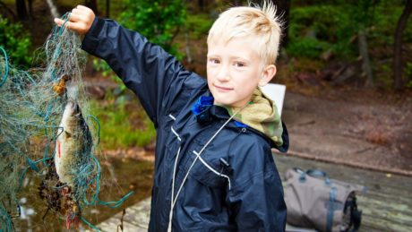 Fiskemiddager: Slik lærer du barna å like fisk